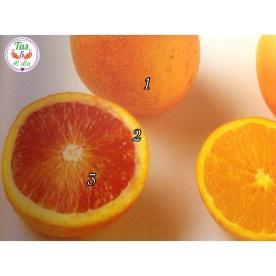 """Naranja """"gran aliado """""""